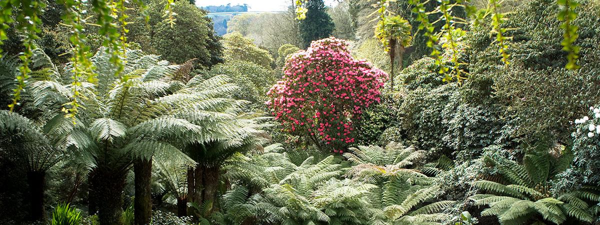 trebah-gardens